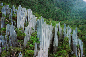 The Pinnacles of Gunung Mulu